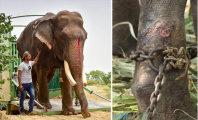 Достойная старость: после 51 года службы «Король слонов» наконец-то обрел свободу