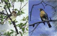 Птицы маслом: реалистичные картины американского художника Тома Митала