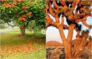 22 фотографии самых странных деревьев, каждое из которых - произведение искусства