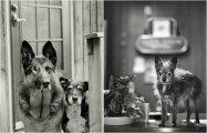 Старые собаки Америки: 20 душевных снимков песиков преклонного возраста