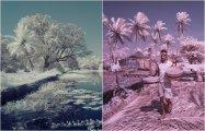 Волшебный Гоа: 16 инфракрасных фотографий знаменитого курорта в межсезонье