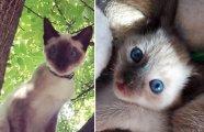 «От крошки до кошки»: 25 прелестных фотографий милых котят, которые превратились во взрослых симпатяг