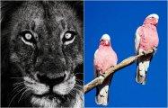 «С любовью к природе»: удивительные фотографии сына легендарного «охотника за крокодилами » Стива Ирвина