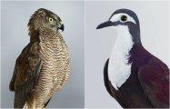 12 завораживающих фотопортретов птиц, которые предстали перед объективом во всей красе