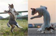 20 неожиданных фотографий, на которых обычные кошки превратились в воинственных ниндзя
