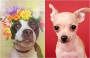 25 выразительных портретов животных, которые остались без дома и ищут новых хозяев