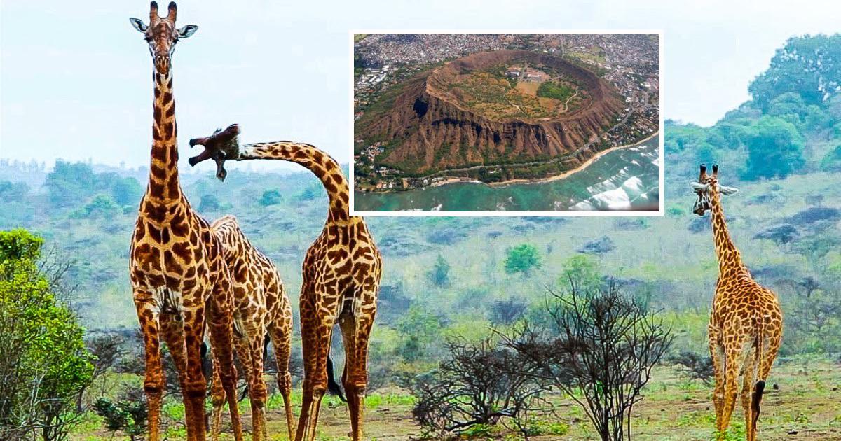 Животные танзании